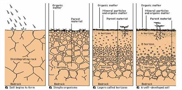 what factors affect soil formation